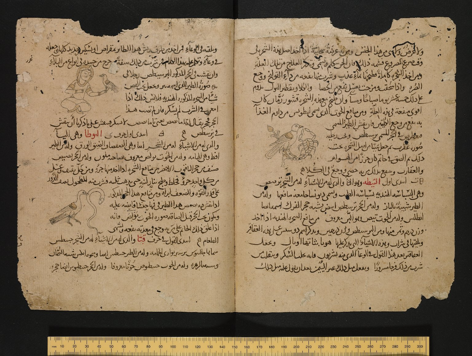 Pages from an Arabic Cyranides